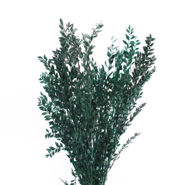 Λαγομηλιά πράσινη