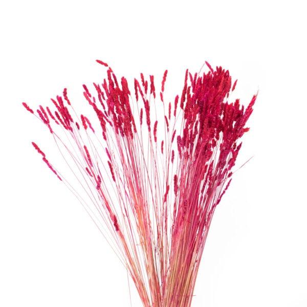 olivia κοκκινο