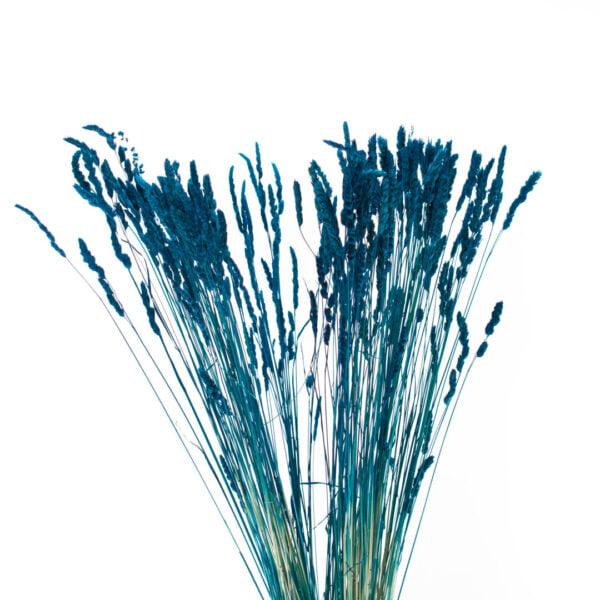 olivia μπλε