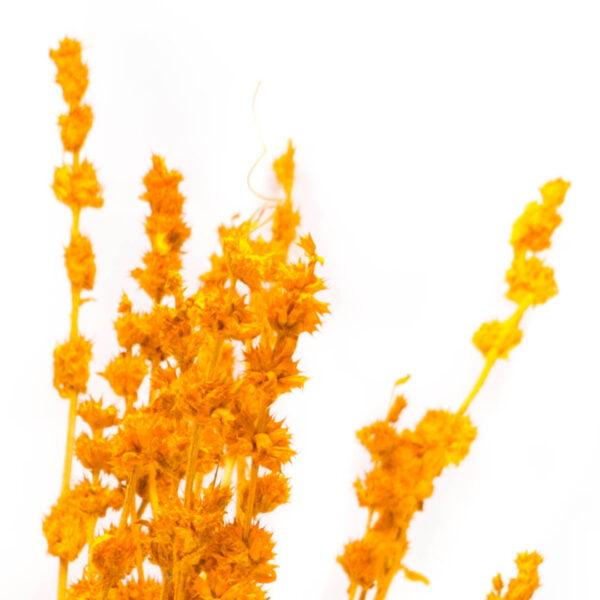 Φασκόμηλο αραβικό πορτοκαλί m