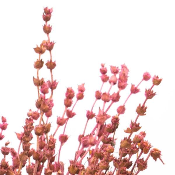 φασκομηλο ροζ m
