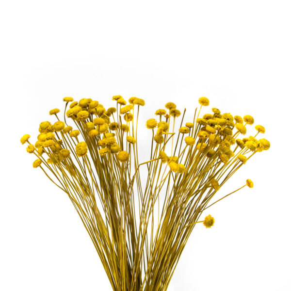 milena κίτρινο