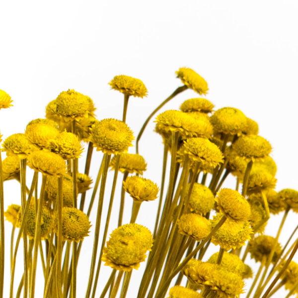 milena κίτρινο m