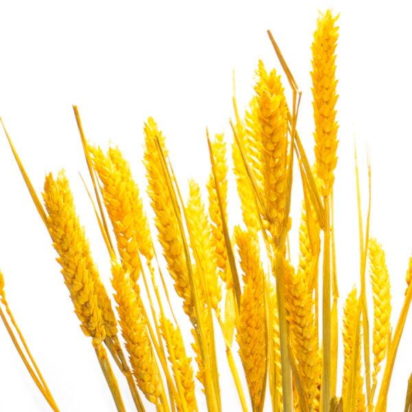 κίτρινο 1