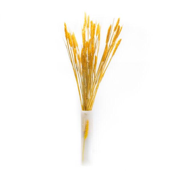 κίτρινο 2